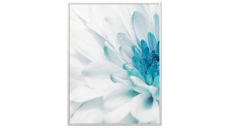 Постер на стену Красивая хризантема-1 60х80см