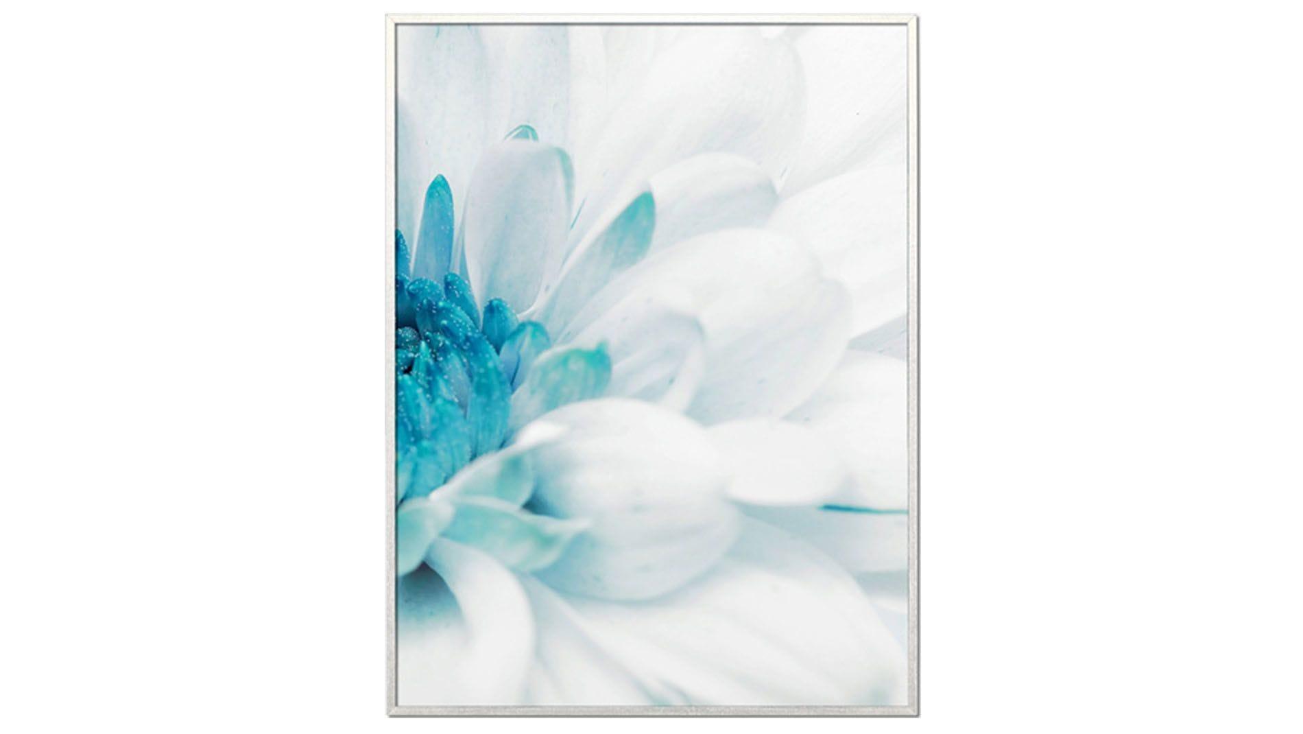Постер на стену Красивая хризантема-2 60х80см